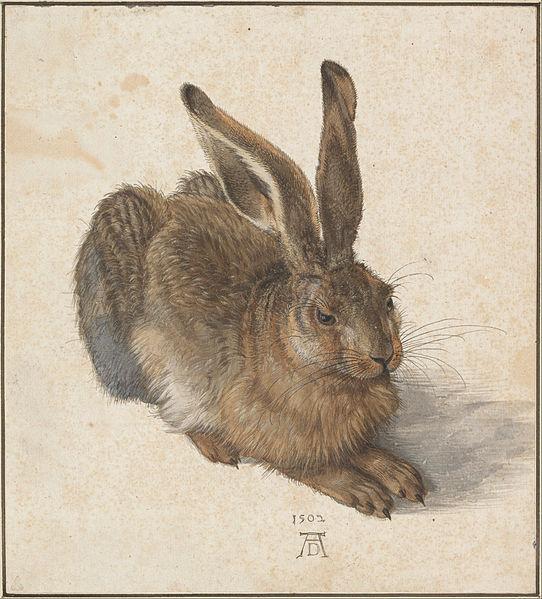 542px-Albrecht_Dürer_-_Hare,_1502_-_Google_Art_Project
